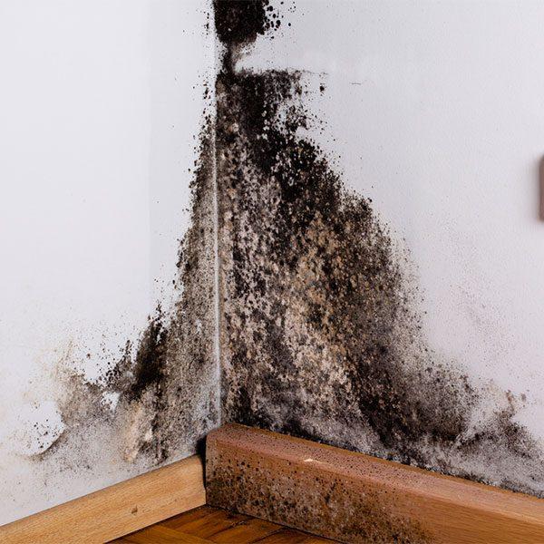 environmental-inspection-mold-lead-asbestos